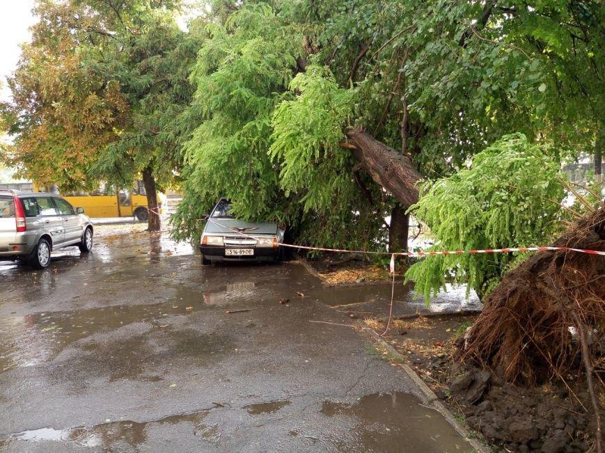 В Одессе небесный потоп повалил деревья (ФОТО), фото-2