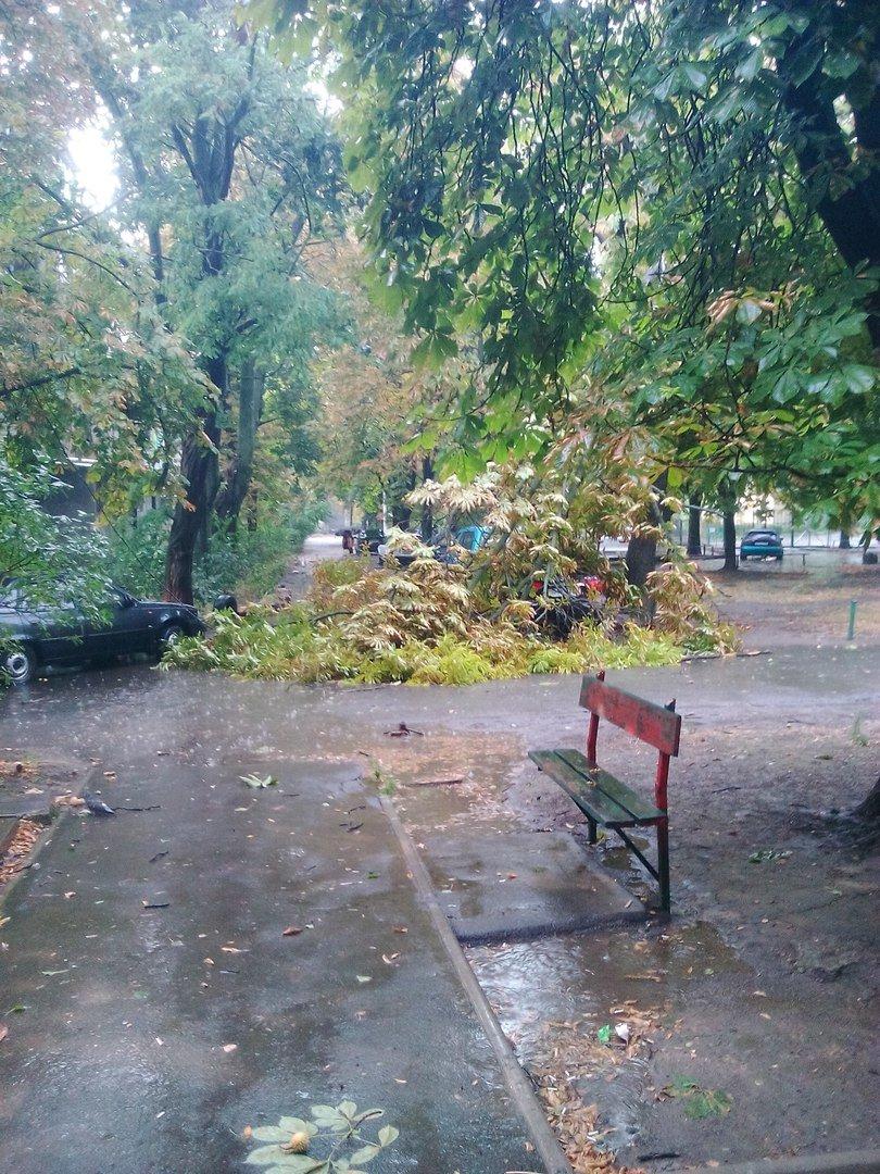В Одессе небесный потоп повалил деревья (ФОТО), фото-3