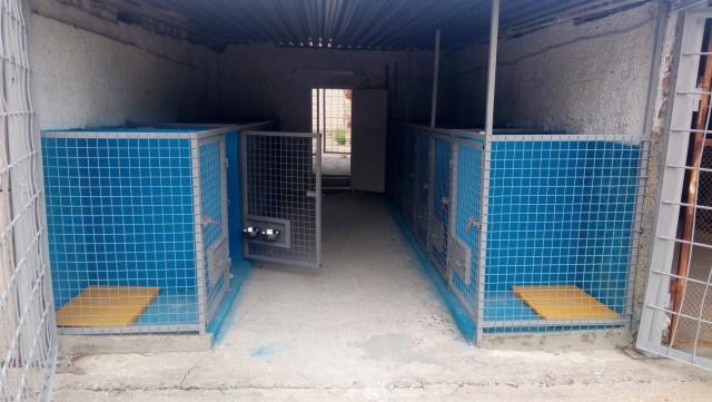 В Южноукраинске откроют приют для бездомных собак (ФОТО), фото-1