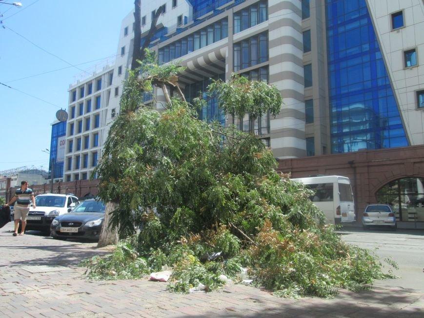 В центре Одессы дерево придавило ларек (ФОТО), фото-10