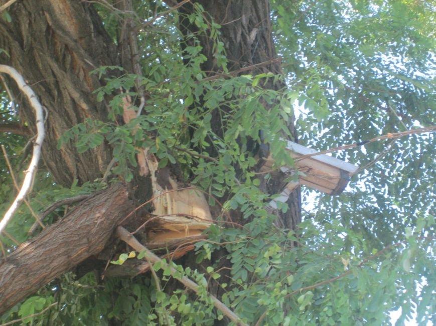 В центре Одессы дерево придавило ларек (ФОТО), фото-2