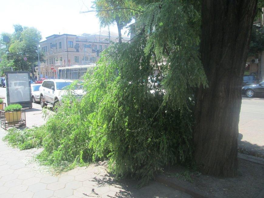 В центре Одессы дерево придавило ларек (ФОТО), фото-3