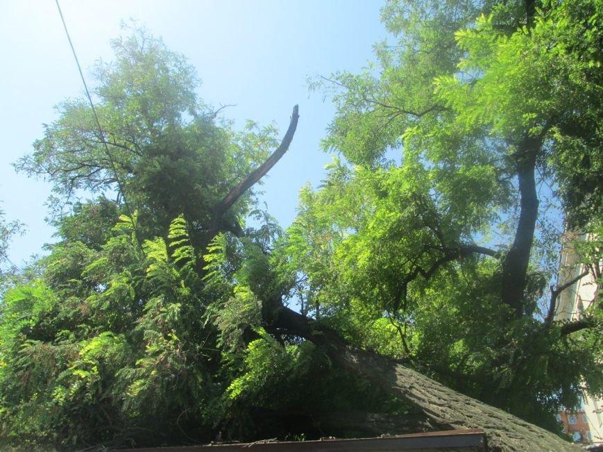 В центре Одессы дерево придавило ларек (ФОТО), фото-6