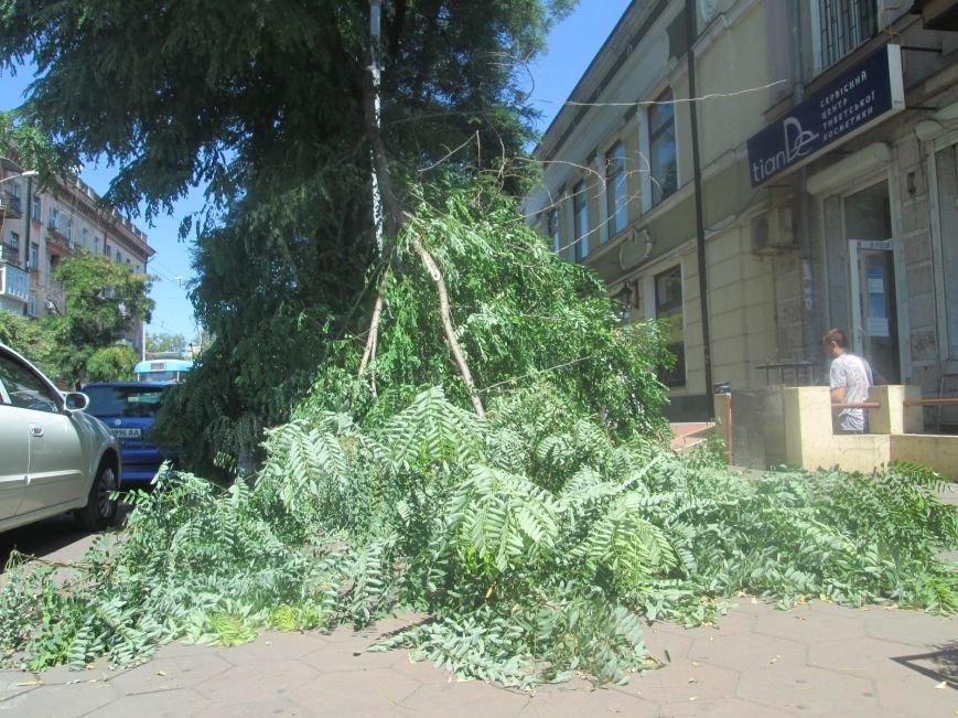 В центре Одессы дерево придавило ларек (ФОТО), фото-1
