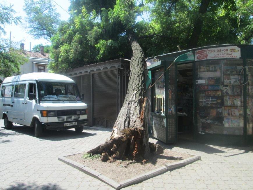 В центре Одессы дерево придавило ларек (ФОТО), фото-5