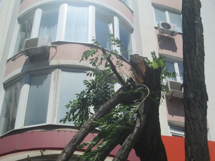 В центре Одессы дерево придавило ларек (ФОТО), фото-9