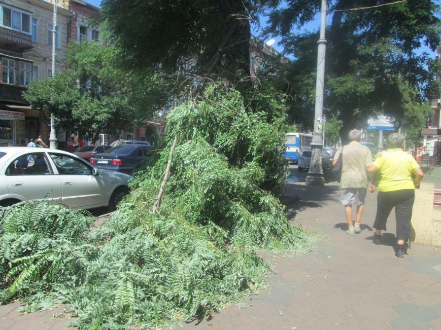 В центре Одессы дерево придавило ларек (ФОТО), фото-4