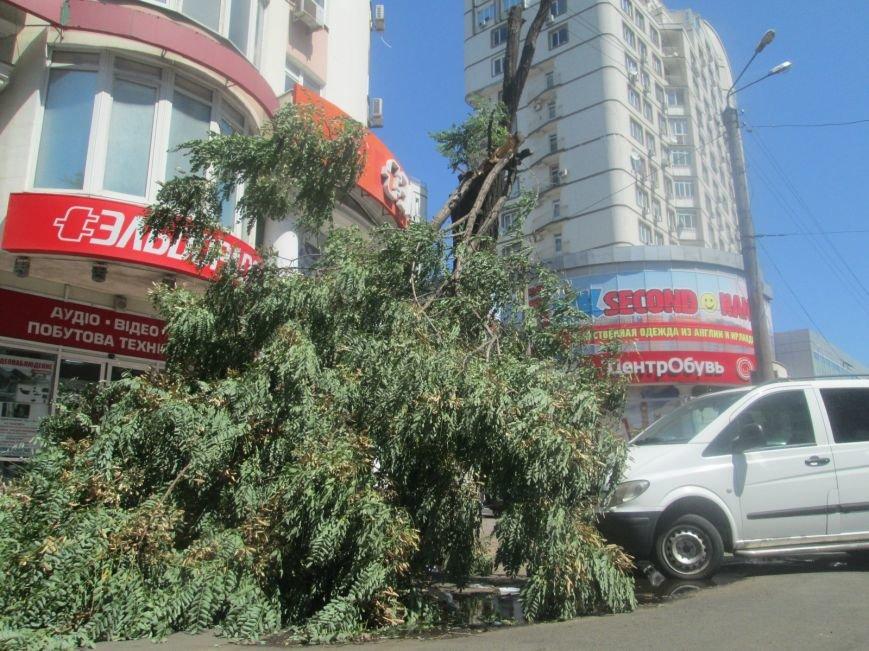 В центре Одессы дерево придавило ларек (ФОТО), фото-8