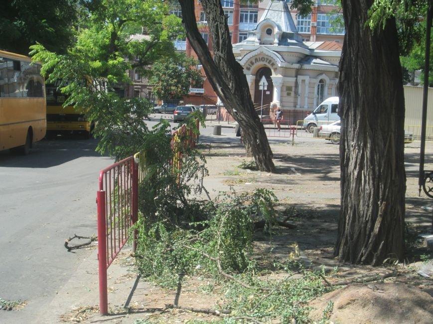 В центре Одессы дерево придавило ларек (ФОТО), фото-7
