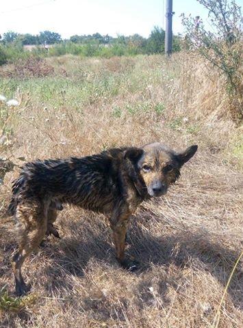 В Кривом Роге патрульные полицейские спасли собаку, провалившуюся в колодец (ФОТО), фото-2