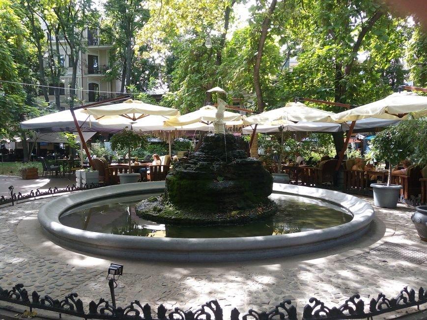 В Одесском фонтане поселились черепаха и рыбы (ФОТОФАКТ), фото-3
