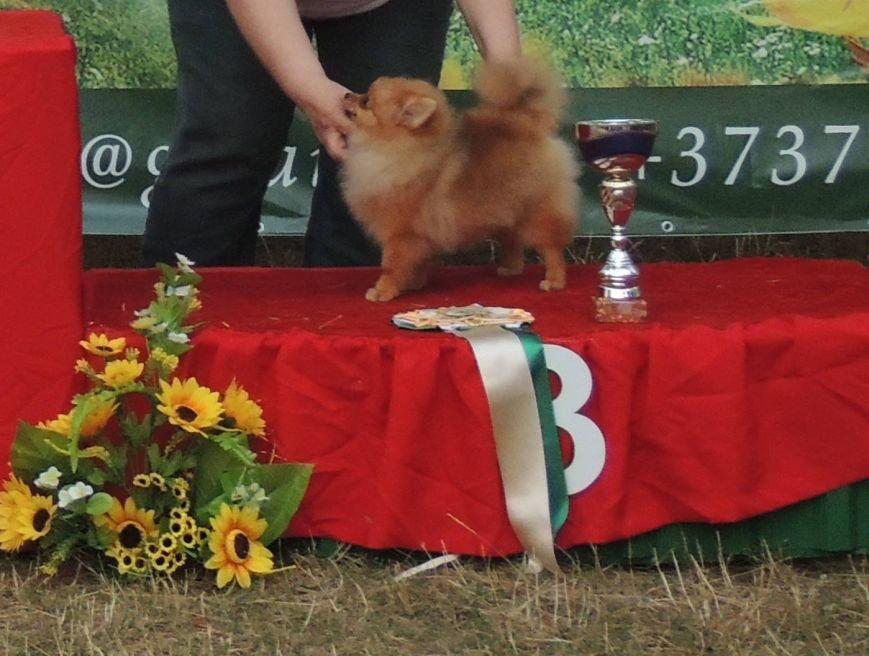 Породистые собаки из Мариуполя стали чемпионами Молдовы (ФОТО), фото-4
