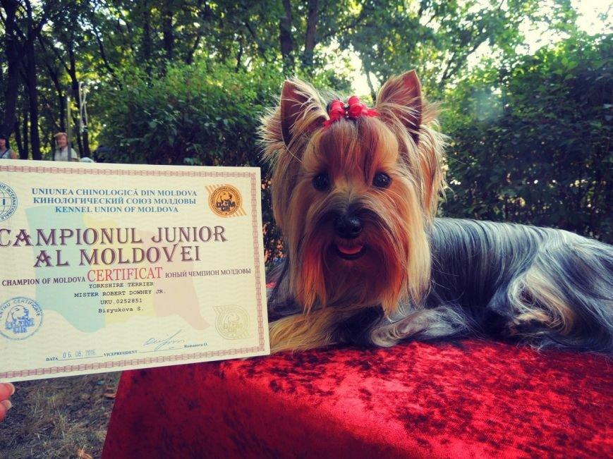 Породистые собаки из Мариуполя стали чемпионами Молдовы (ФОТО), фото-5
