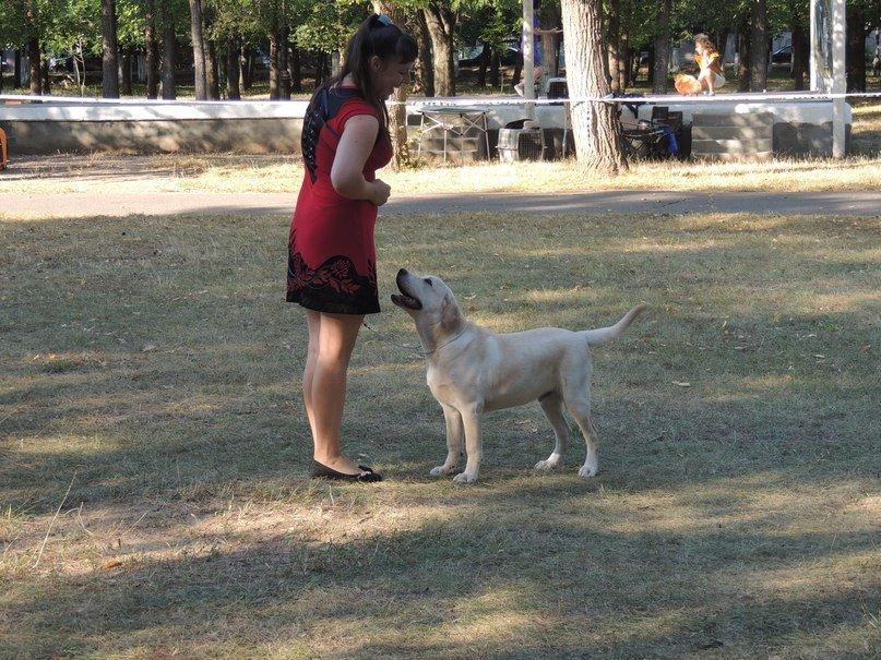 Породистые собаки из Мариуполя стали чемпионами Молдовы (ФОТО), фото-1