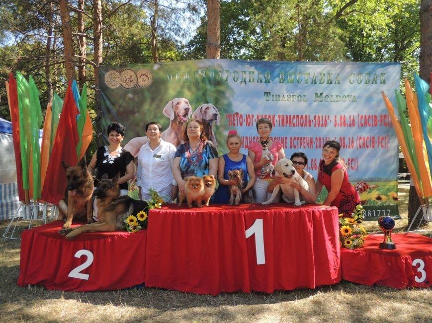 Породистые собаки из Мариуполя стали чемпионами Молдовы (ФОТО), фото-3