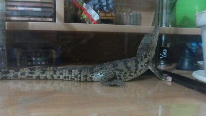 Под Одессой на улице люди подобрали живого крокодила (ФОТО), фото-2