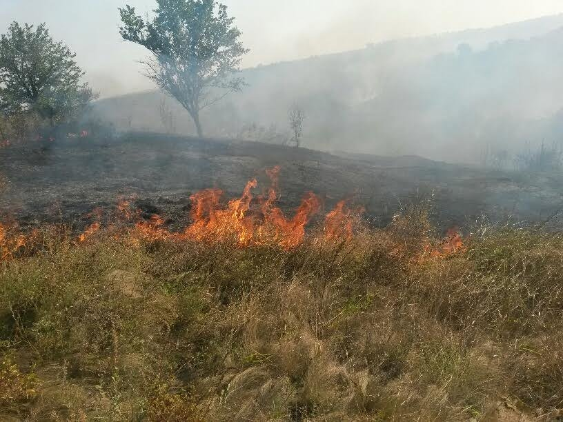 Возле Мариуполя горит трава (ФОТО), фото-3