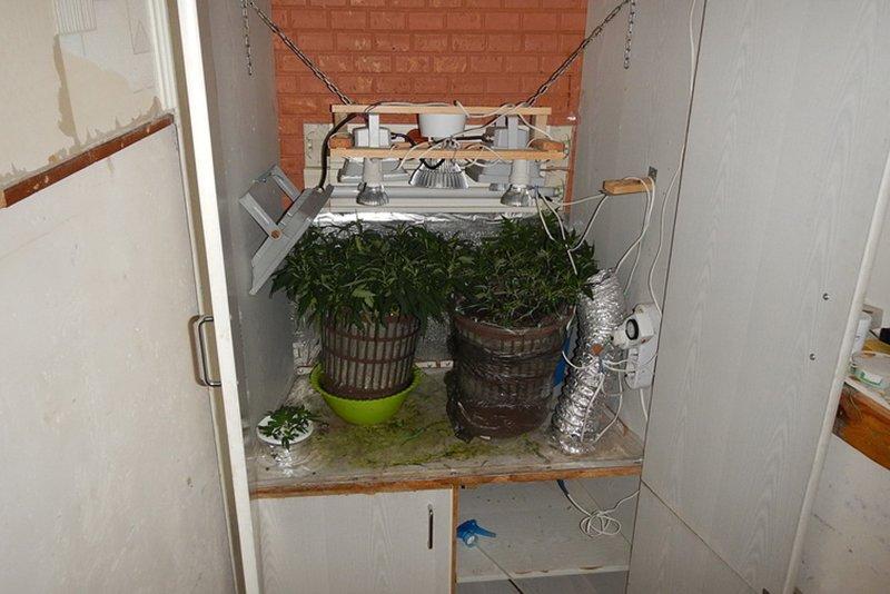 Белгородец устроил на балконе мини-теплицу для выращивания конопли, фото-1
