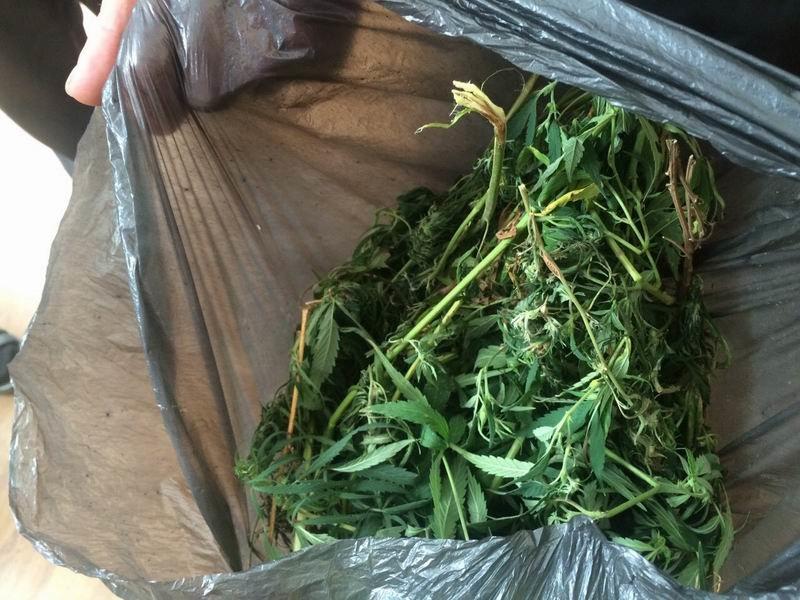 Запас на зиму - в Славянске у мужчины нашли килограмм конопли, фото-1