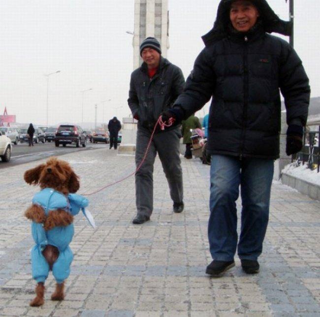 ФОТО: Собаки, що ходять, як люди, фото-2