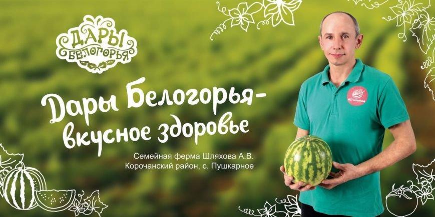 На белгородских дорогах появилась «фермерская» социальная реклама, фото-3