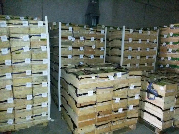 Витебская таможня задержала санкционных овощей и фруктов на 330 тысяч деноминированных рублей, фото-3