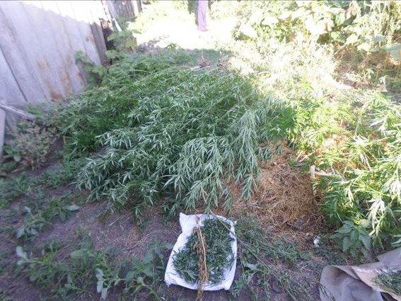 У жителя Снигиревки изъяли больше килограмма каннабиса и конопли (ФОТО), фото-1