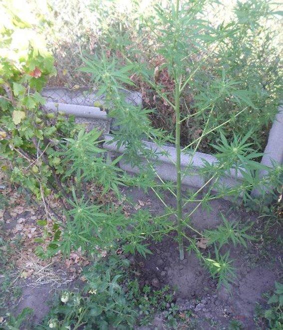 У жителя Снигиревки изъяли больше килограмма каннабиса и конопли (ФОТО), фото-2