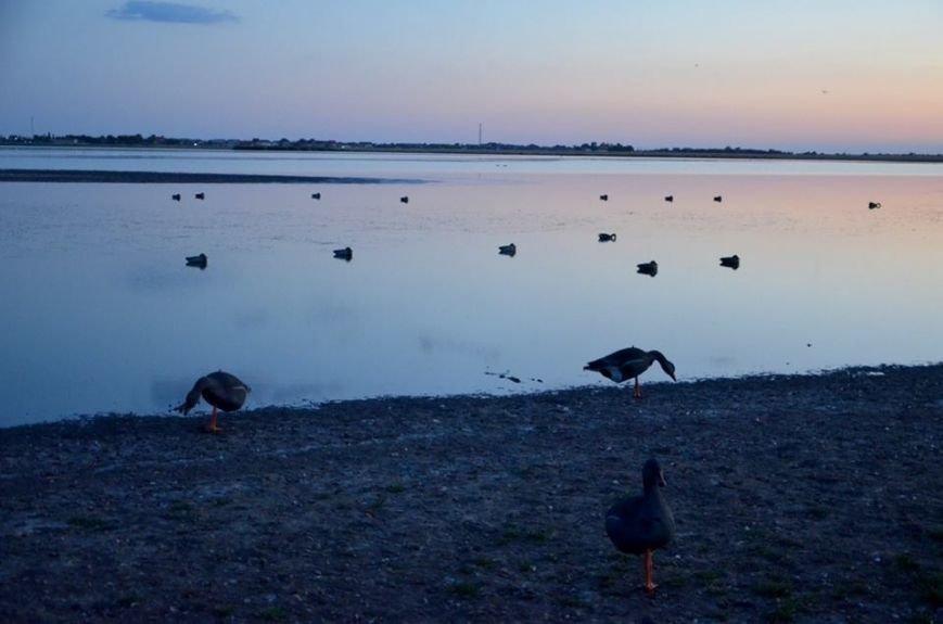 Браконьеры наступают: В Одесской области в заповедной зоне уничтожают пеликанов (ФОТО), фото-3