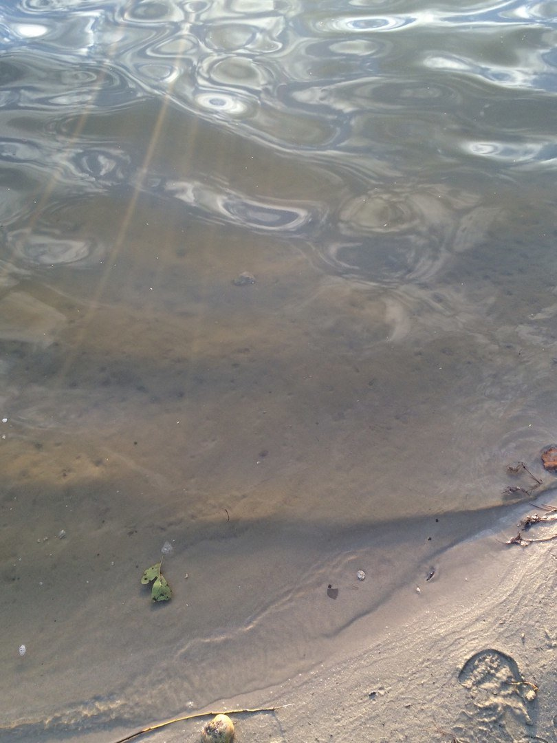 Тест-драйв озер поблизу Львова: їдемо на Винниківське озеро (ФОТО), фото-13