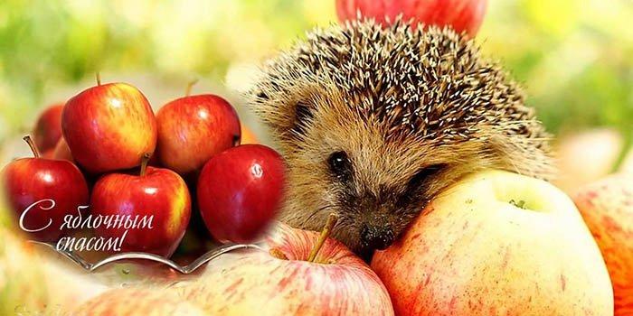 Яблочный Спас – праздник плодов, фото-2