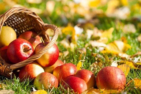 Яблочный Спас – праздник плодов, фото-1