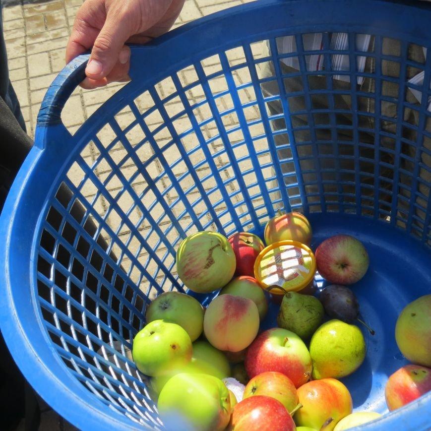 Яблочный день (ФОТОПЯТНИЦА), фото-26