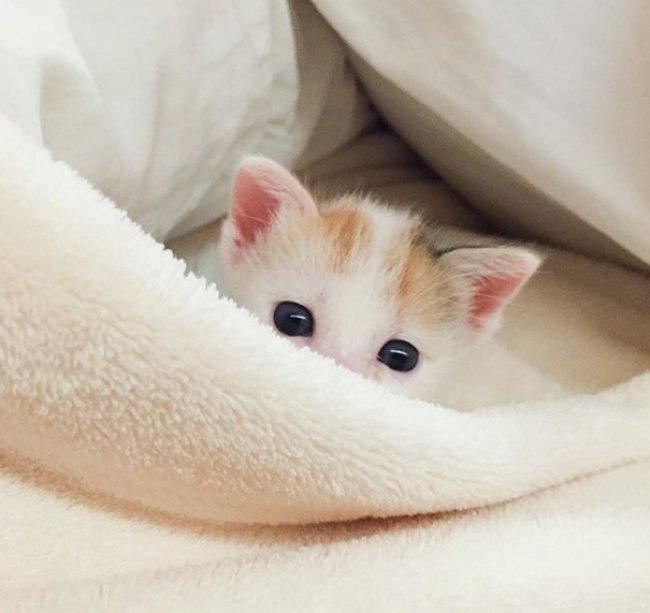 """10 кошенят, які """"взірвали"""" інтернет (фото), фото-7"""
