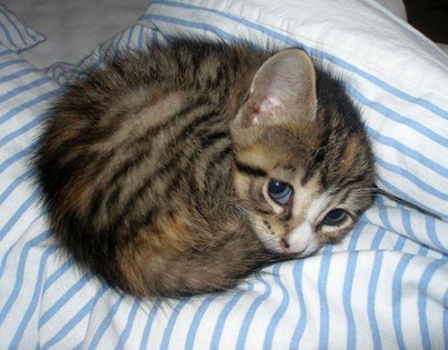 """10 кошенят, які """"взірвали"""" інтернет (фото), фото-3"""