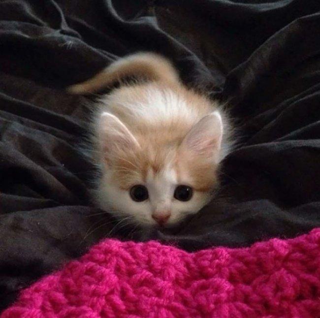 """10 кошенят, які """"взірвали"""" інтернет (фото), фото-2"""