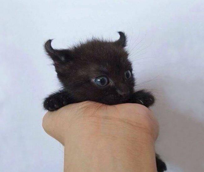 """10 кошенят, які """"взірвали"""" інтернет (фото), фото-6"""