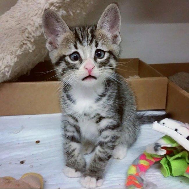 """10 кошенят, які """"взірвали"""" інтернет (фото), фото-5"""