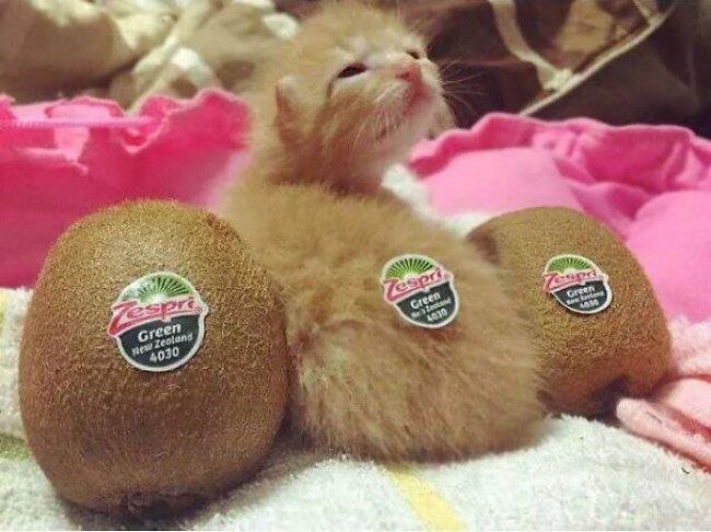 """10 кошенят, які """"взірвали"""" інтернет (фото), фото-1"""