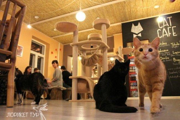 cat cafe5