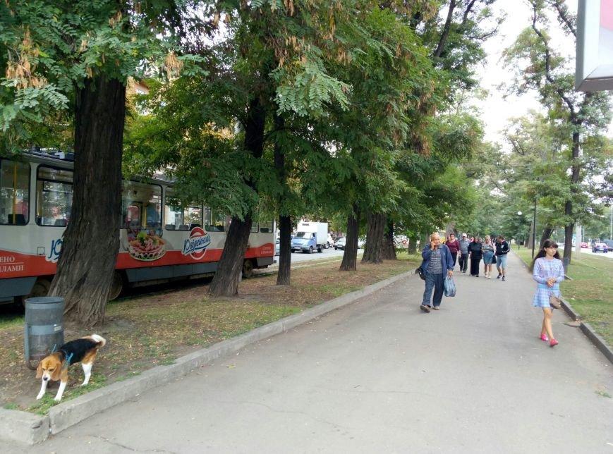 дтп1004