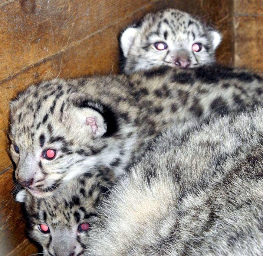 В Николаевском зоопарке неизвестные отравили пуму и снежного барса, фото-2