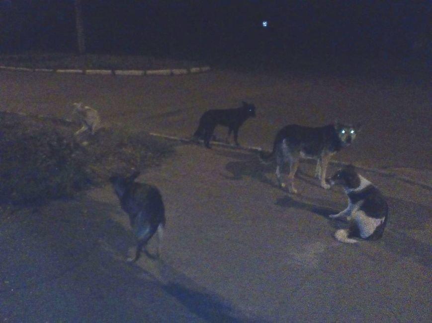 Бродячие собаки угрожают жизни краматорчан, фото-2