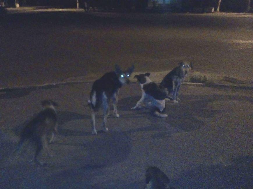 Бродячие собаки угрожают жизни краматорчан, фото-4