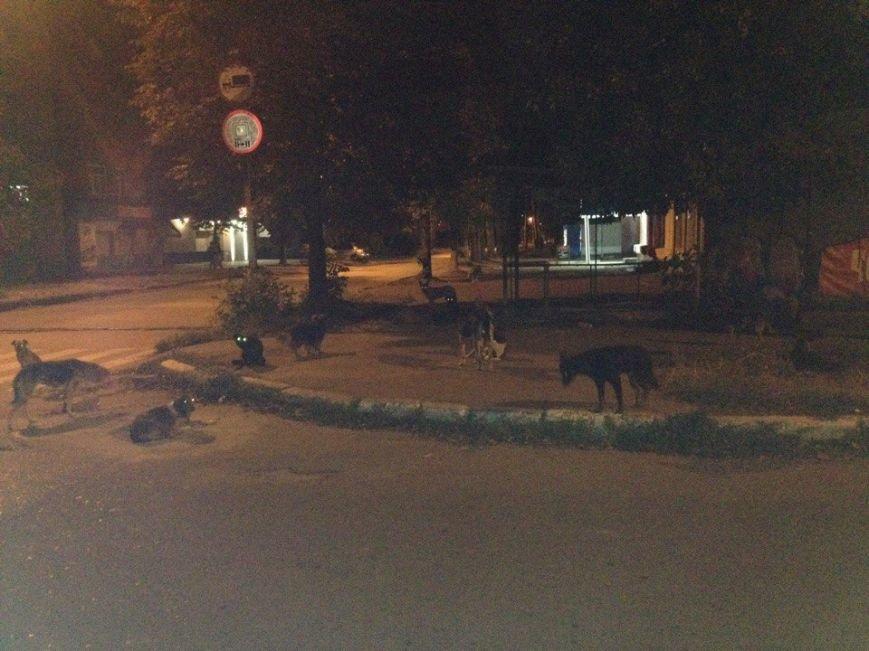 Бродячие собаки угрожают жизни краматорчан, фото-1