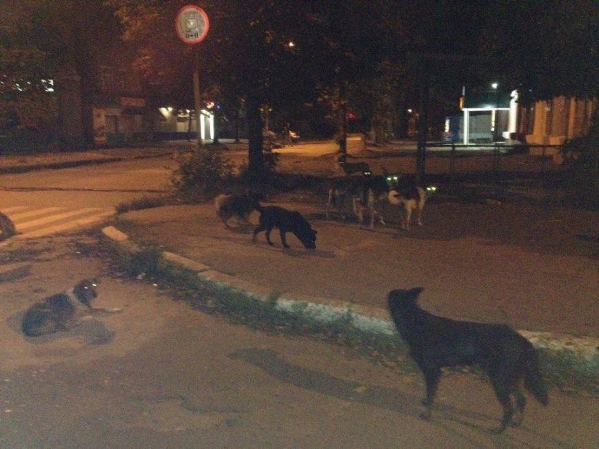 Бродячие собаки угрожают жизни краматорчан, фото-3