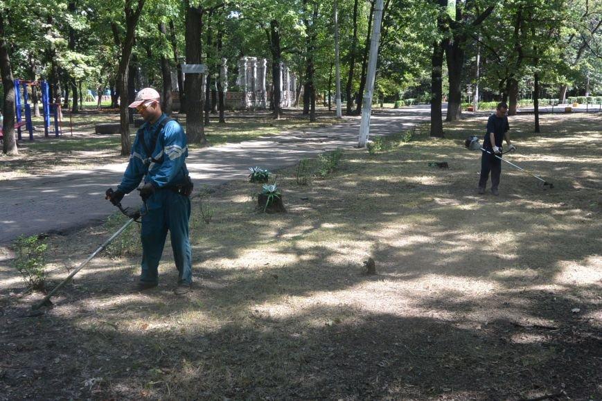 Енакиевцы продолжают бороться с амброзией, фото-3