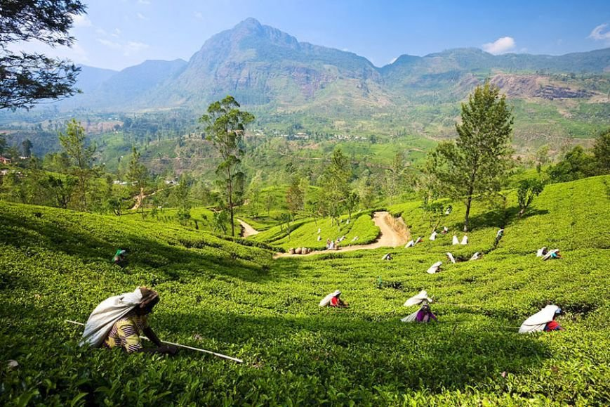 Туры на Шри Ланку: сбежать от городской рутины, фото-2