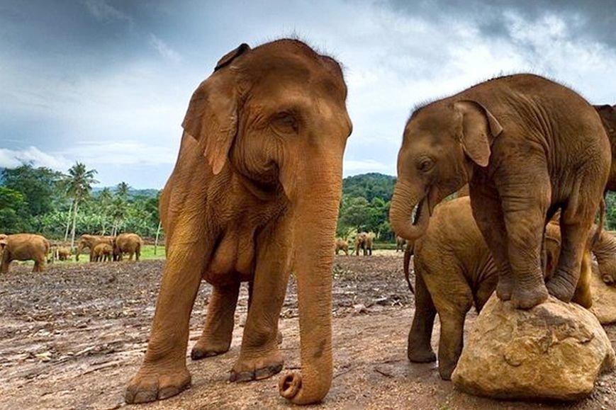 Туры на Шри Ланку: сбежать от городской рутины, фото-3