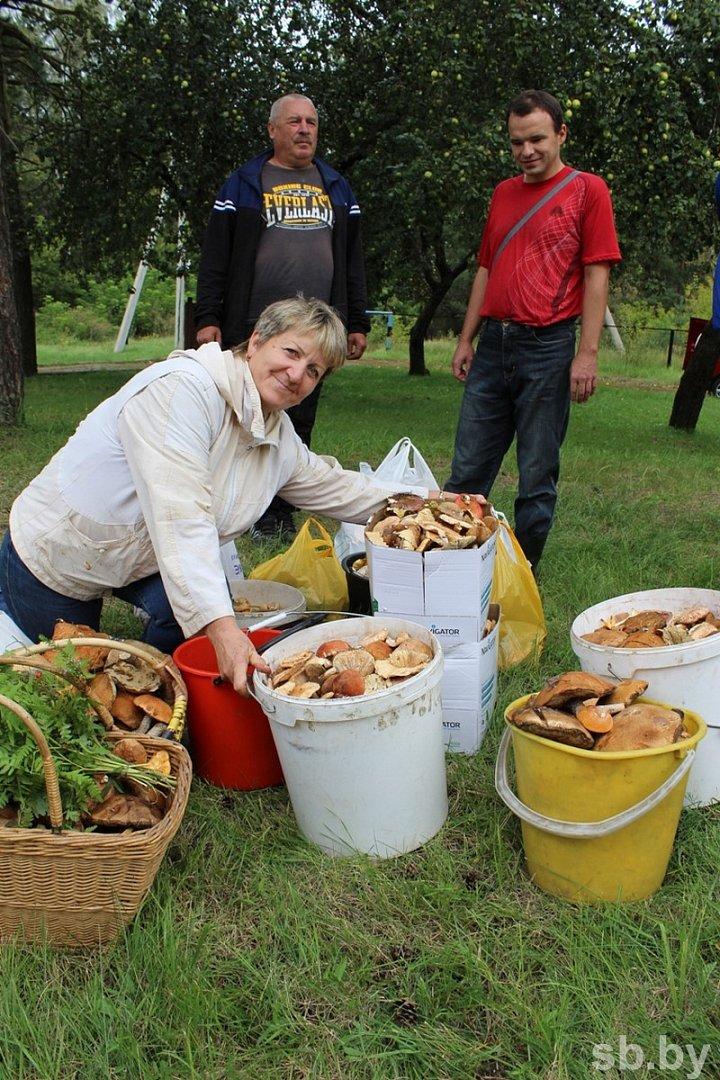 Пять тонн грибов собрали участники чемпионата под Полоцком. Фоторепортаж, фото-5
